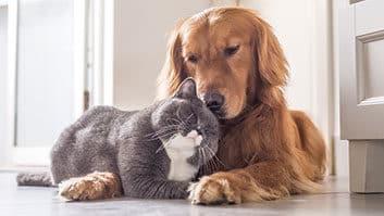 Justiça decide que condomínios não podem proibir animais de estimação em casa.