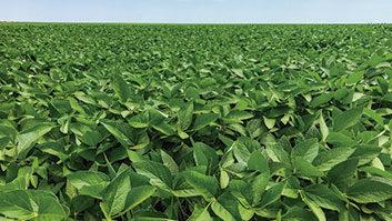 Novo relatório da Previdência autoriza cobrança do funrural nas exportações agrícolas.
