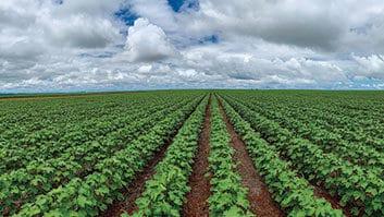 STJ fixa importante precedente acerca da recuperação judicial de produtor rural.
