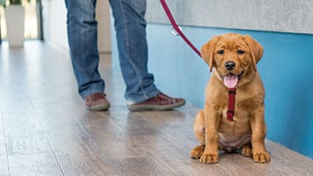 Condomínio não pode impedir circulação de cães com guia e coleira, decide TJ.
