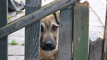 Justiça autoriza a invasão domiciliar para resgate de animais sob crime de maus-tratos.
