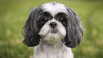 Cachorro ingressa na Justiça pedindo indenização a pet shop por danos físicos e psicológicos.